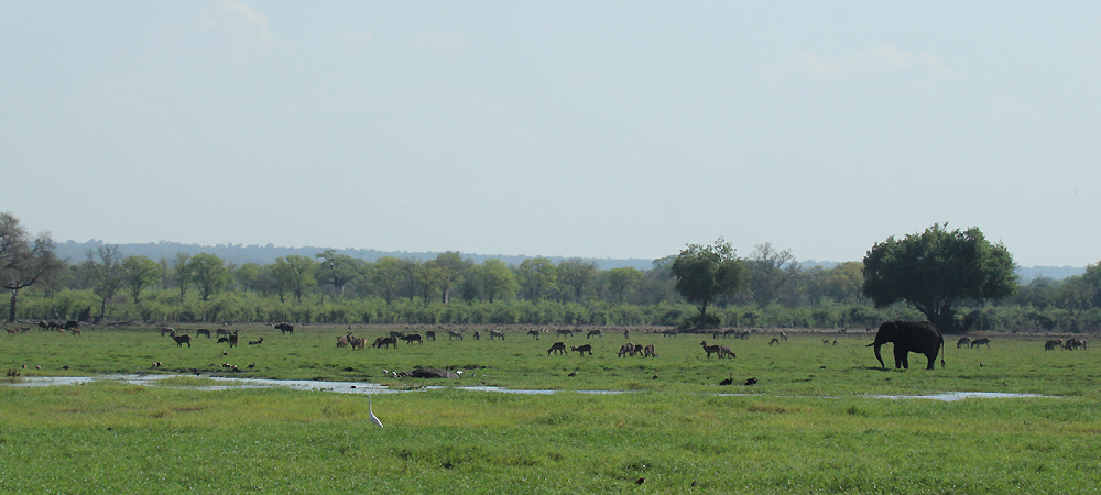 machaniwa wildlife vista