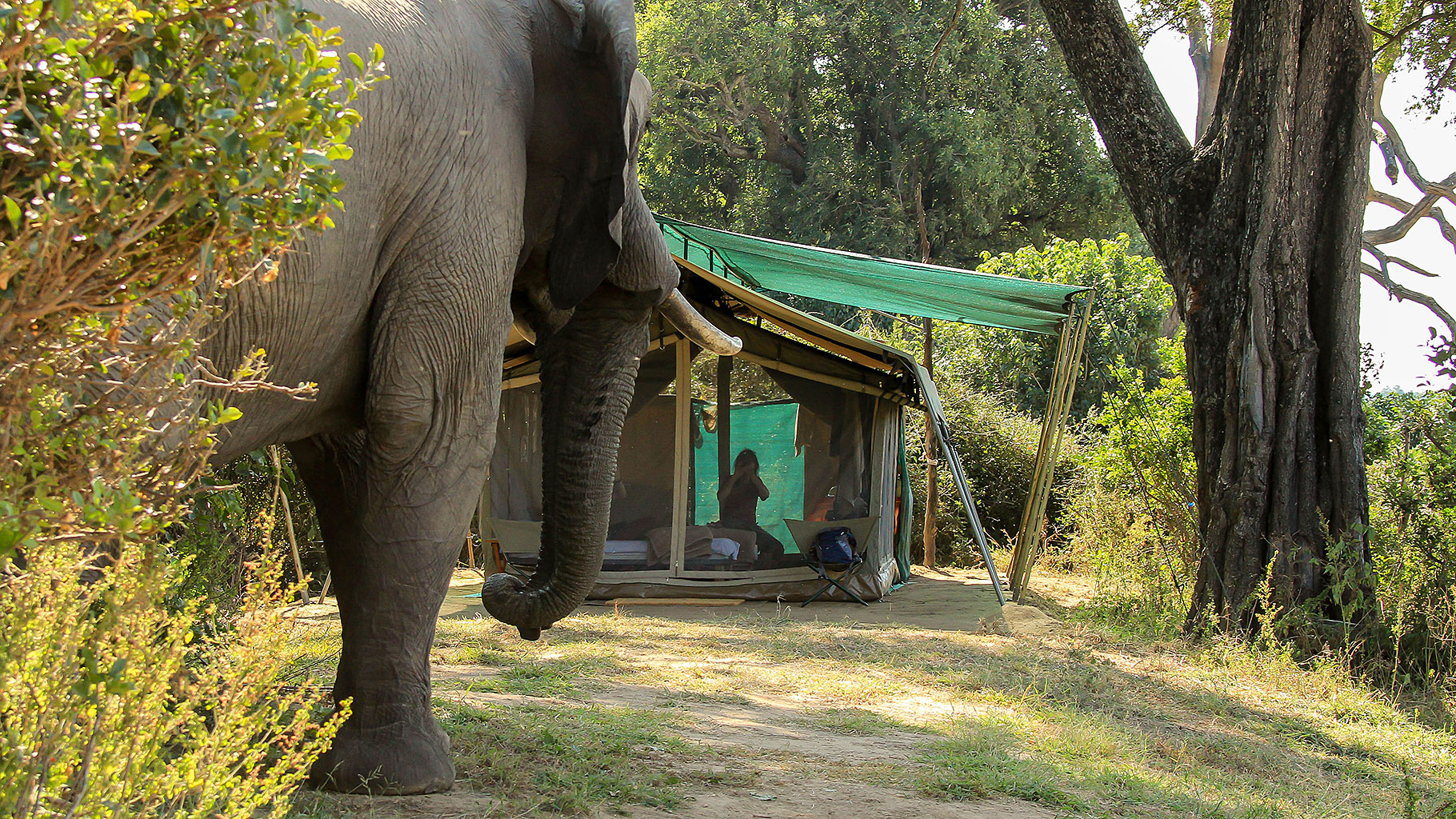 GBC-guest-tent-with-elephant2